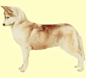 Husky - Fell 39