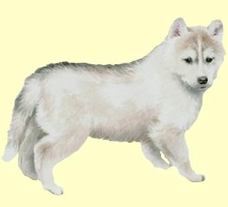Husky - Fell 52