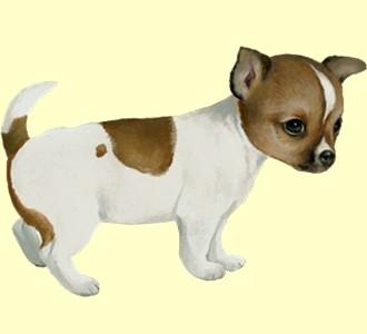 Chihuahua - Fell 60